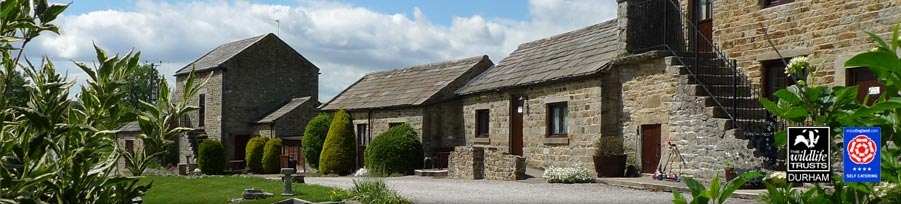 East Briscoe Farm Cottages, Self-Catering Cottages in Teesdale, County Durham